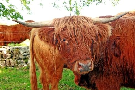 Mull (Photo: Kirsti MacDonald Jareg)