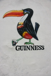 Galway (Photo: Kirsti MacDonald Jareg)