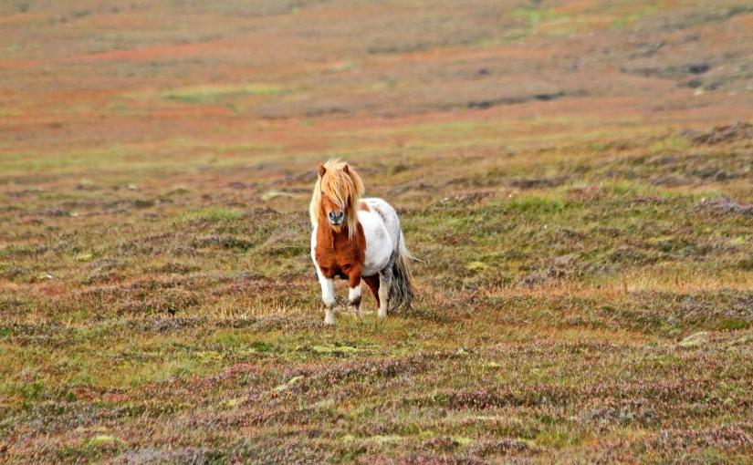 «Den 12. mann» Shetlandsfarerne og Jan Baalsrud – nyfilm